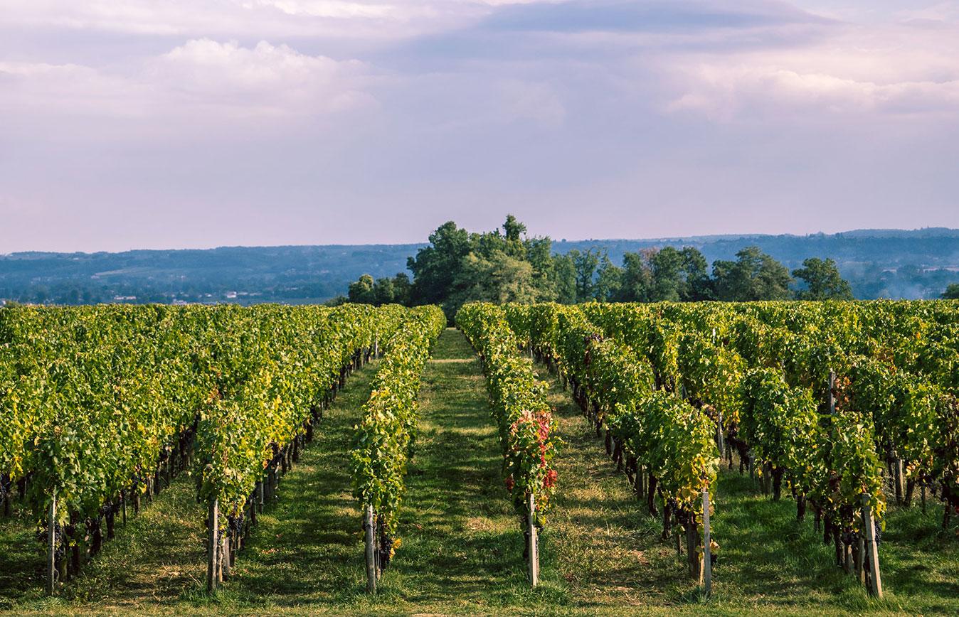 Vineyard <br /> and Environnement